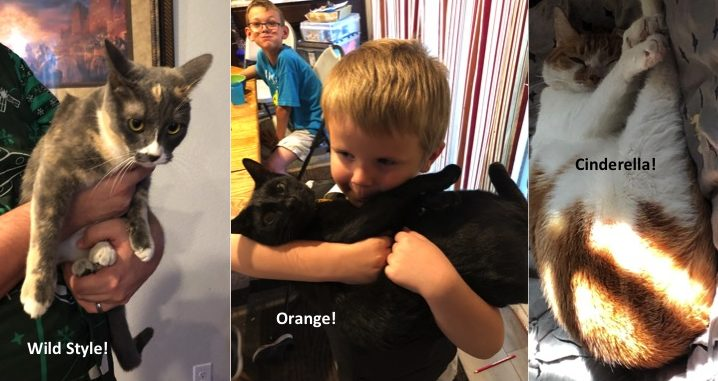 Cinderella, Orange and Wild Style found fosters in PA!