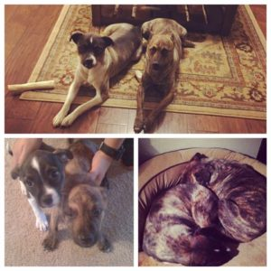 Sadie and Speedy Found a Foster!