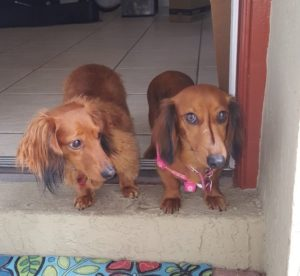 Walle and Willow have found a foster in IN!