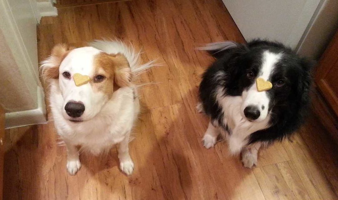 Agnes and Steven need a foster in RI!