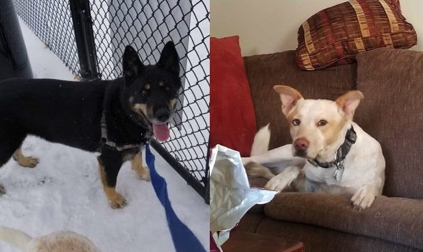 Bear and Gromit need a foster in NM!