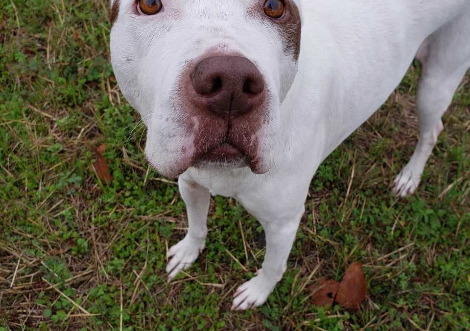 Hype found a foster in TX!