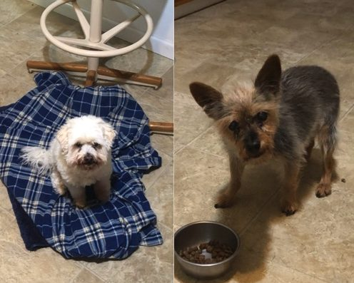 Molly and Alice need a foster in CA!