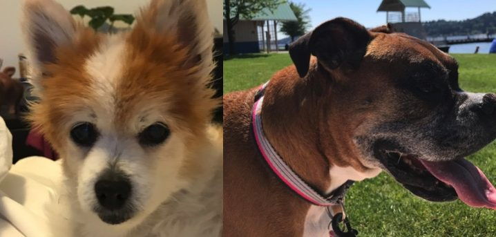 Maddie and Gemini need a foster in WA!
