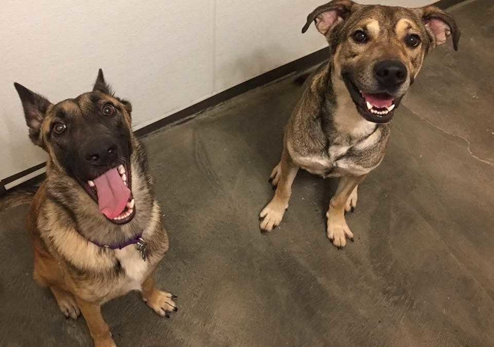 Charlie and Hugo need a foster in TX, AZ, NM, CO, OK, or LA!