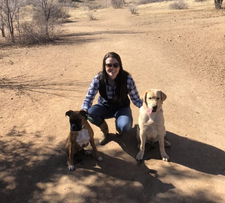 May and Gauge need a foster in CO!