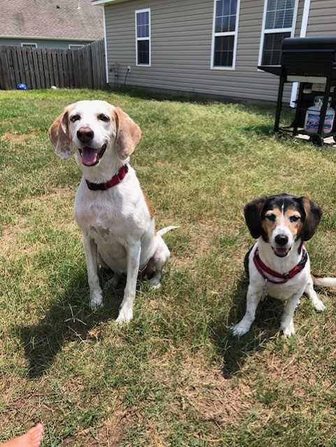Myrtle and Follie need a foster in NC!