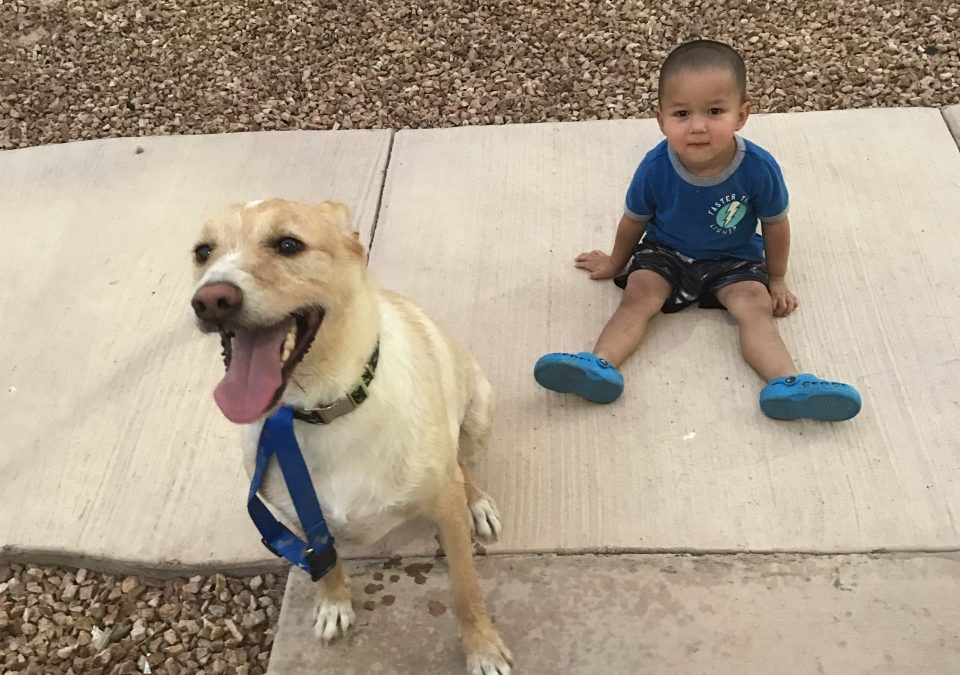 Sam found a foster in AZ!