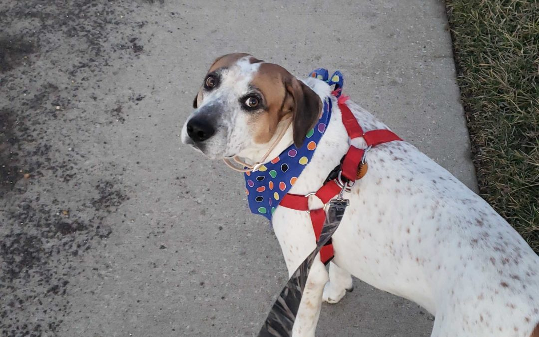 Byson needs a foster in MO!