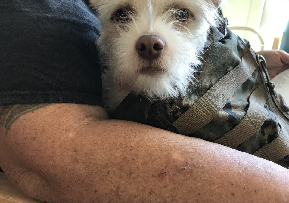 Chase found a foster in CA!