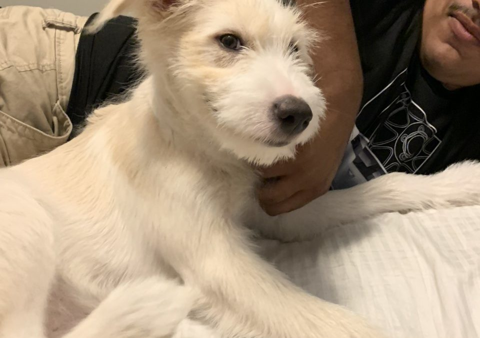 Blanca needs a foster in CA!