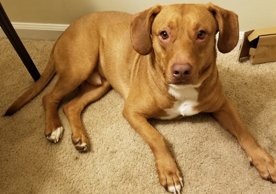 Mazo needs a foster in NC!