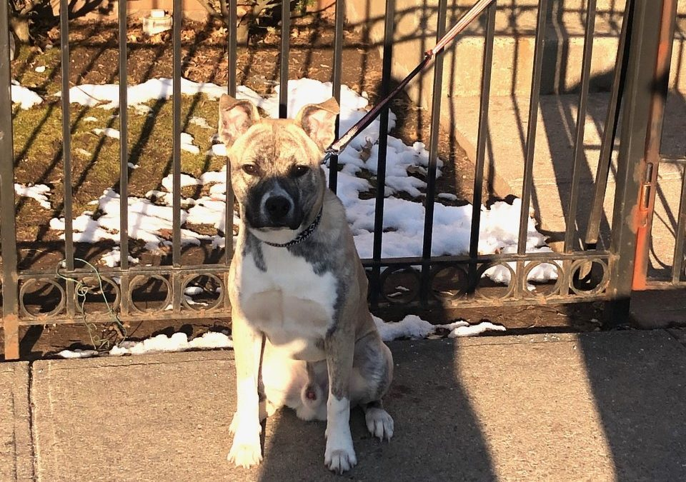 Maxwell needs a foster in NJ!