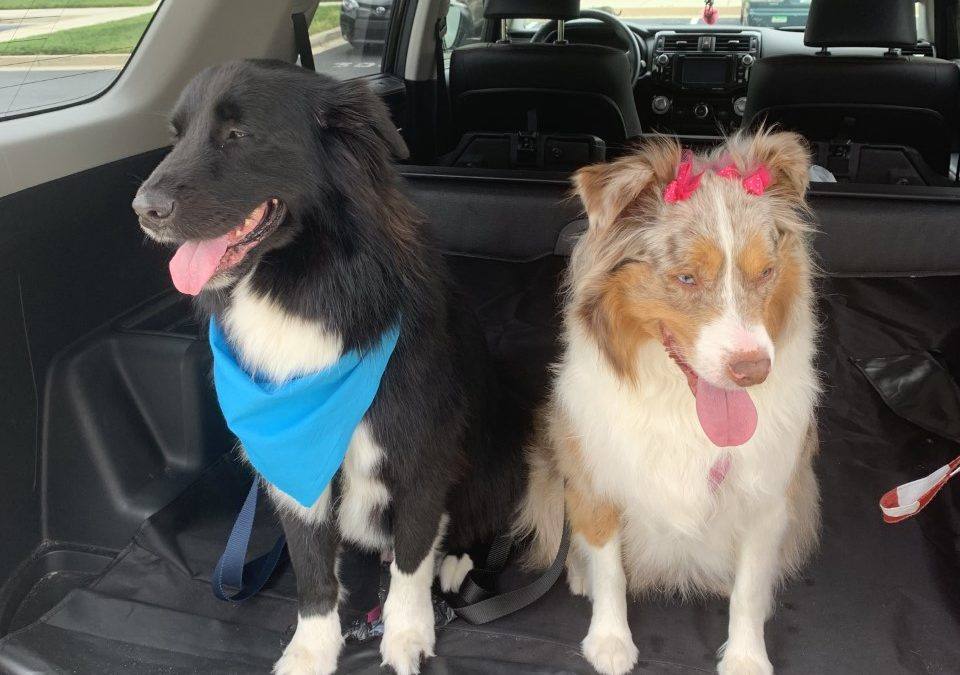 Ozzie and Jennie need a foster in FL!