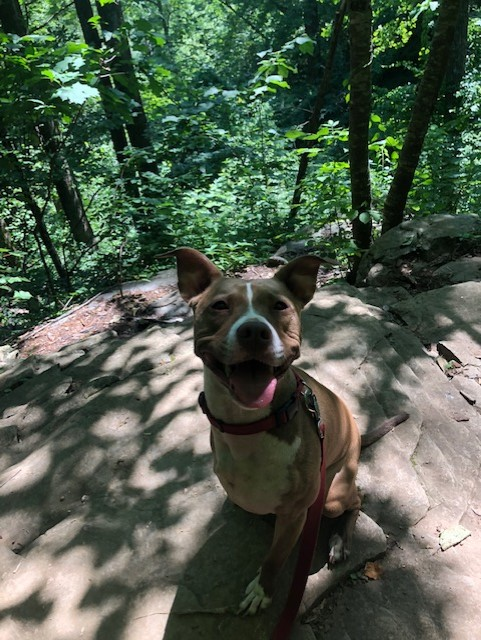 Trixie needs a foster in VA or beyond!