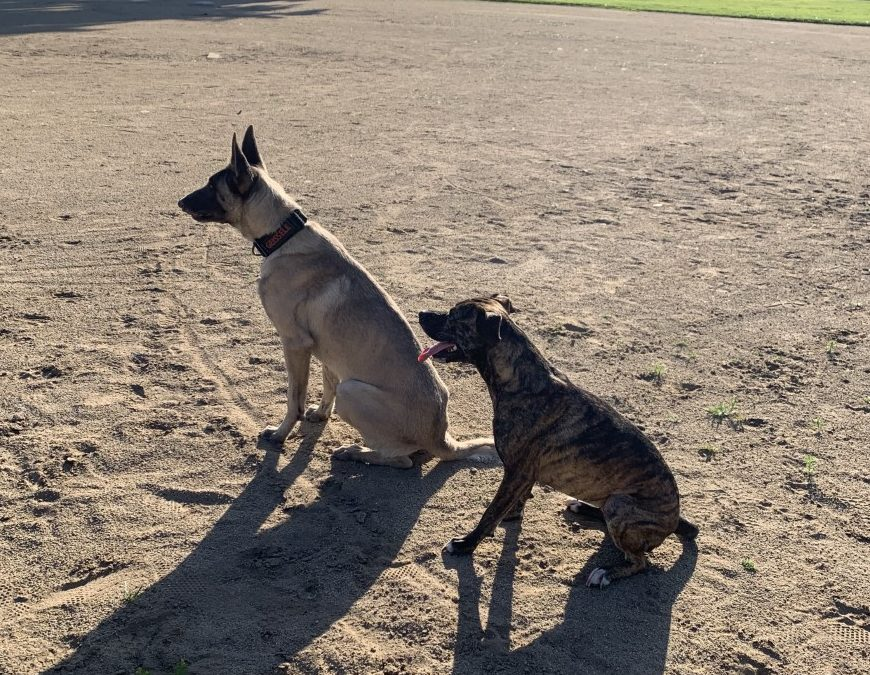 Geissele and Nala need a foster in CA!