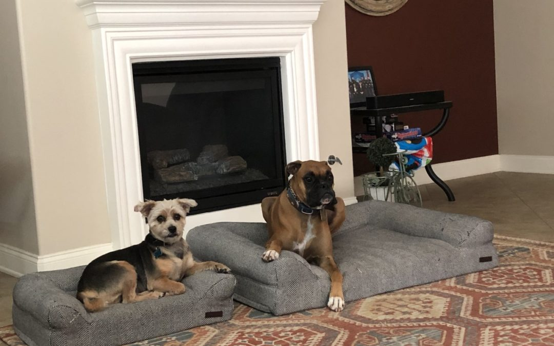 Logan and Maverick need a foster in CA!