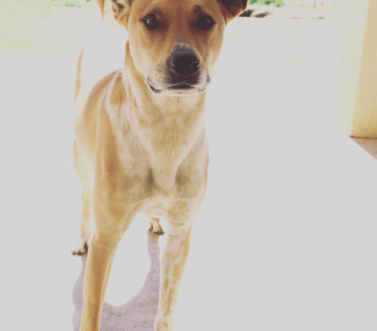 Oliver needs a foster home in TX!