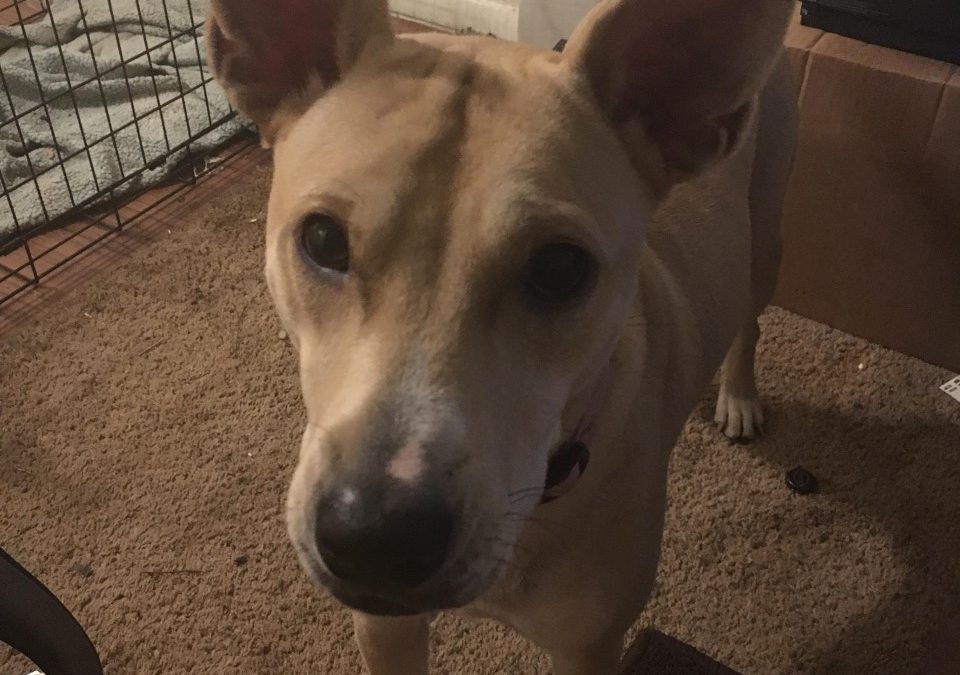 Luna needs a foster in TX!