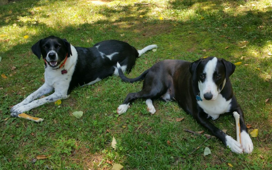 Sammy and Reba need a foster anywhere between TN and FL!