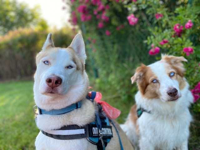 Kairo and Morocco need a foster anywhere in the US!
