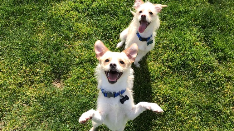 Curry and Klay need a foster in OR!