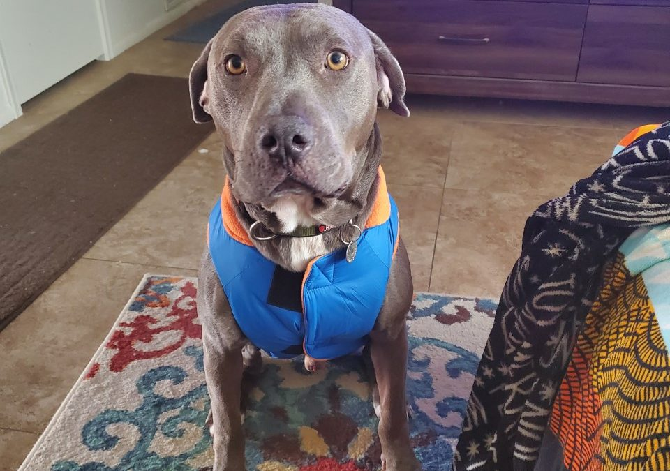 Ace found a foster in TX!