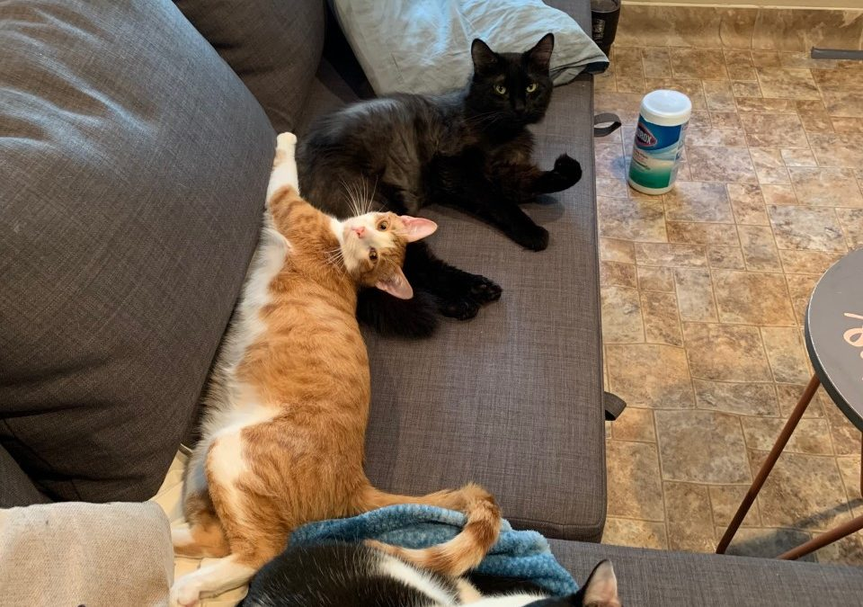 Nuggets, Mouse, and Cookie found a foster in CO!