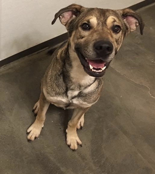 Hugo needs a foster in TX!
