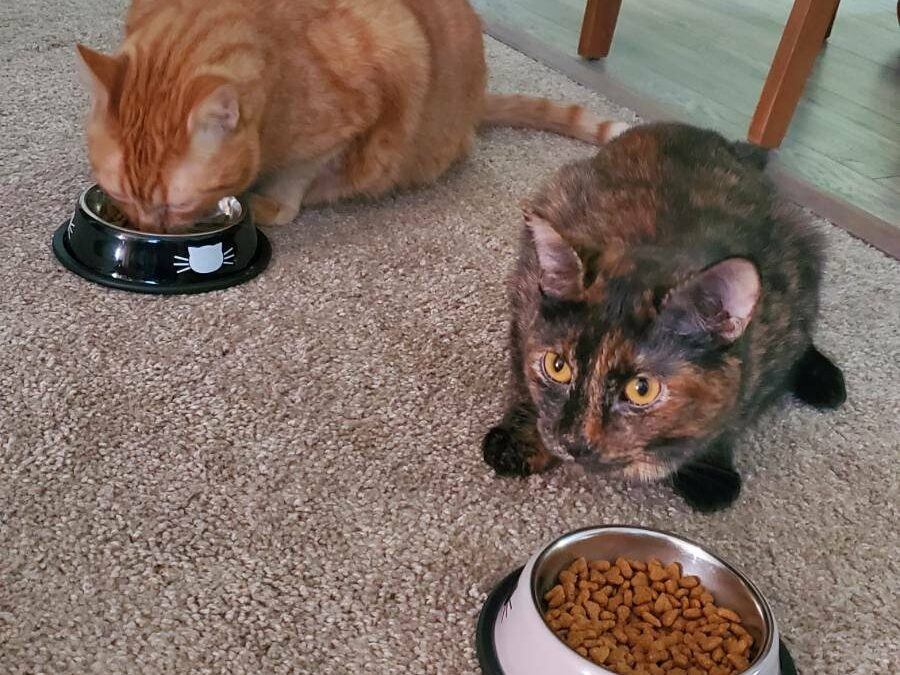 Oliver and Taco need a foster in KS!