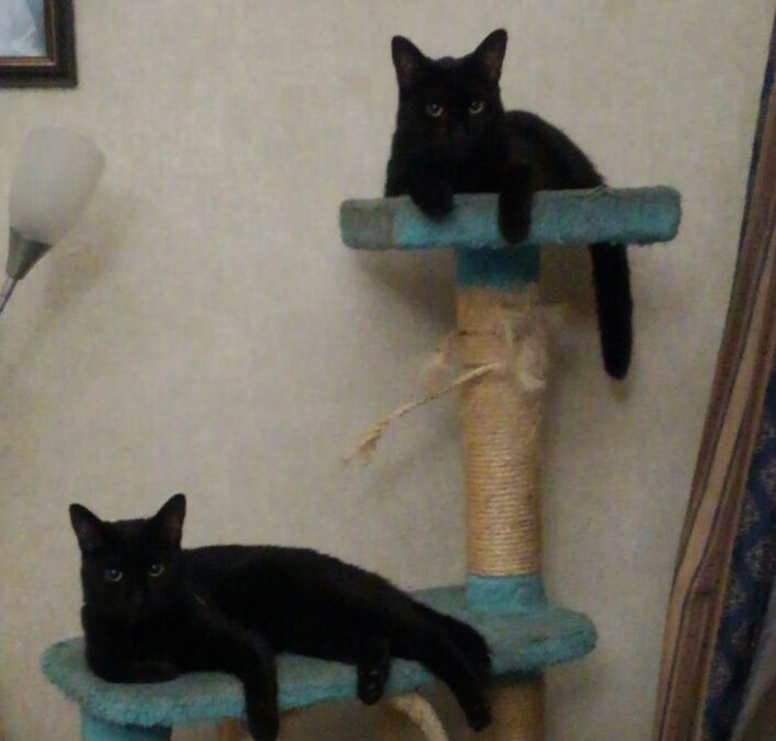 Delta and Ember need a foster in FL!