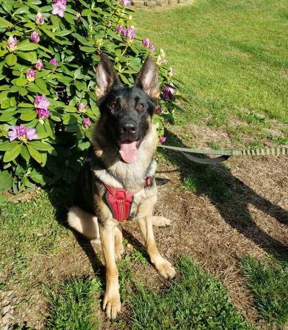 Luna needs a foster in PA!