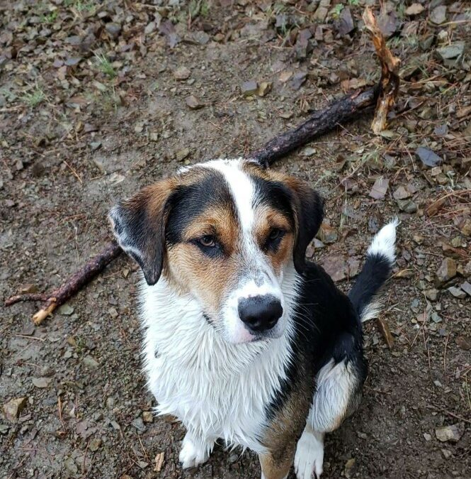 Ruger found a foster in ID!
