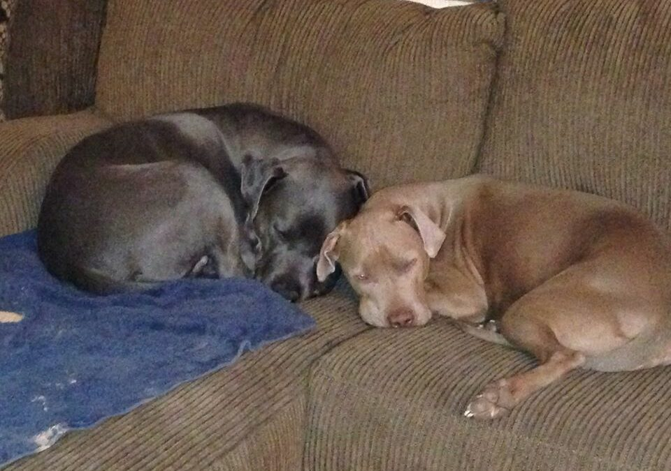 Brooklyn and Brinks need a foster ANYWHERE in the US!