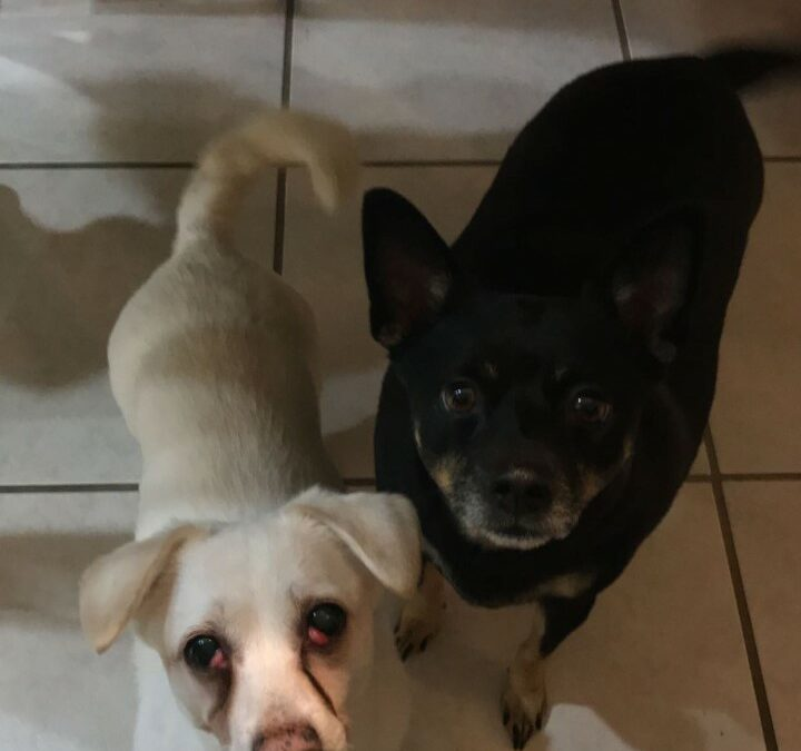 BuzzB and Polo need a foster in FL!