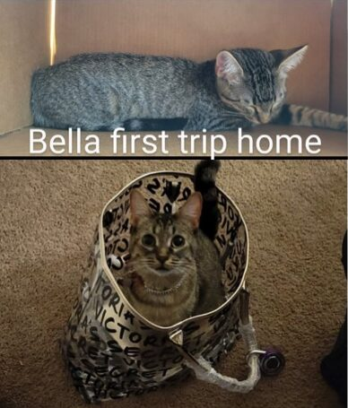 Bella and Tigger need fosters in TX!
