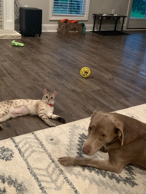 Luna and Penelope need a foster in AL!